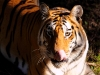 Asiatic Wildlife 012