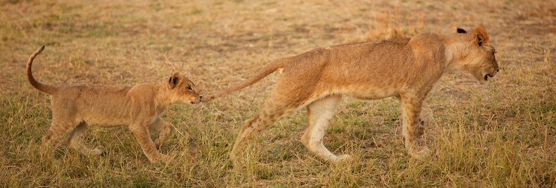 South Luangwa is home to some of the best wildlife viewing and animal encounters on the continent