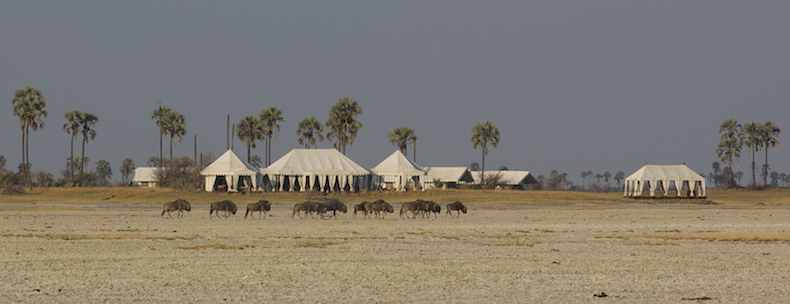San Camp overlooks the sprawling Makgadikgadi salt pans with its endless processions of wildebeest and zebra trekking past in search of water
