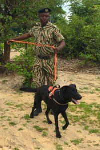 CSL Detection Dog Unit training