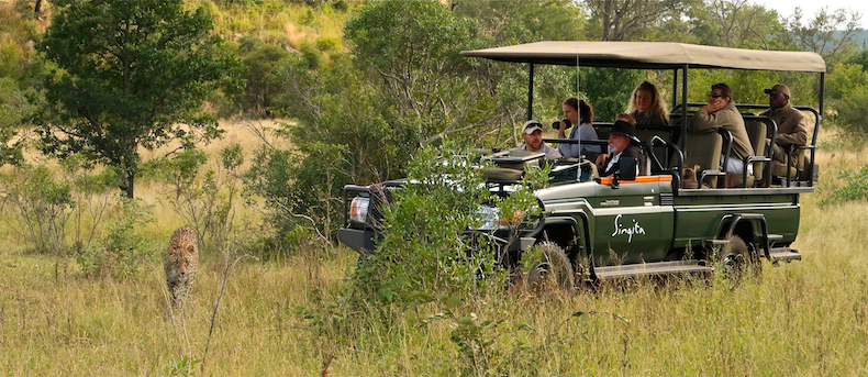The Sabi Sand is world renowned for its incredible density of super-relaxed leopards