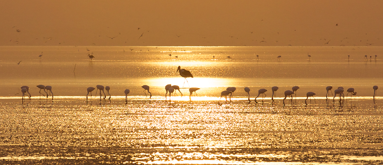 Lake Manyara with its rich food sourceis a seasonal haven for flamingoes, storks and pelicans