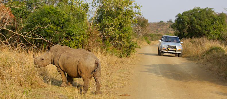 KwaZulu-Natal's Hluhluwe-iMfolozi Game Reserve remains South Africa's rhino stronghold