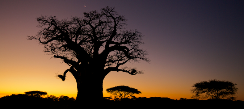 The quintessential African sunset with baobab silhouette on Malilangwe Wildlife Reserve in Zimbabwe