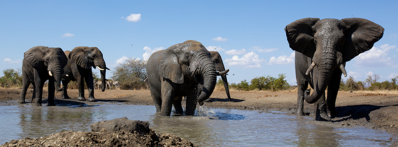 The elephants of Malilangwe Wildlife Reserve in southeastern Zimbabwe