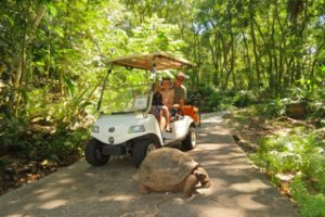 Electric golf carts allow guests to explore